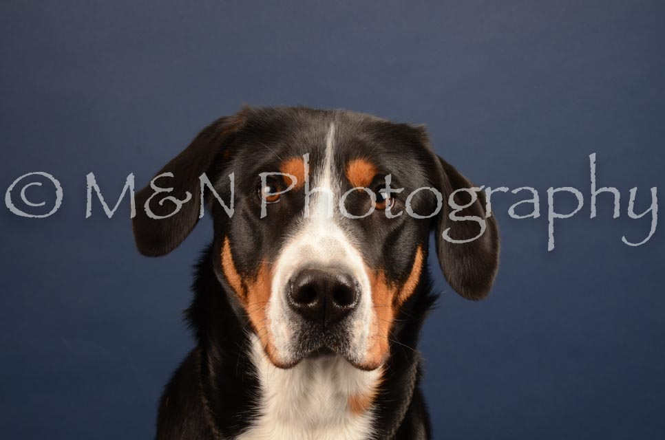 M&N Photography -DSC_4424