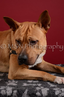 M&N Photography -DSC_3196