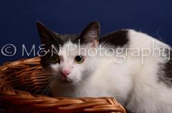 M&N Photography -IMG_4489