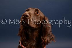 M&N Photography -DSC_4522
