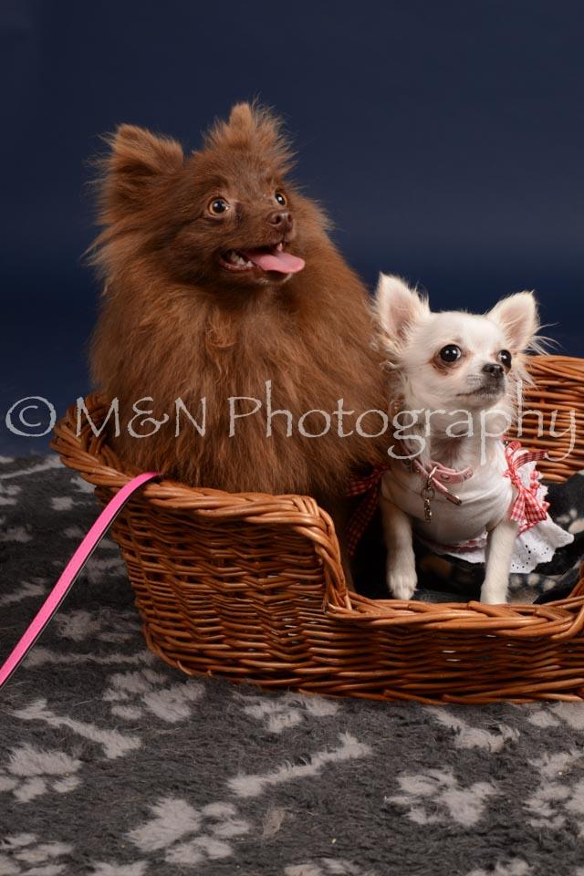 M&N Photography -DSC_0446