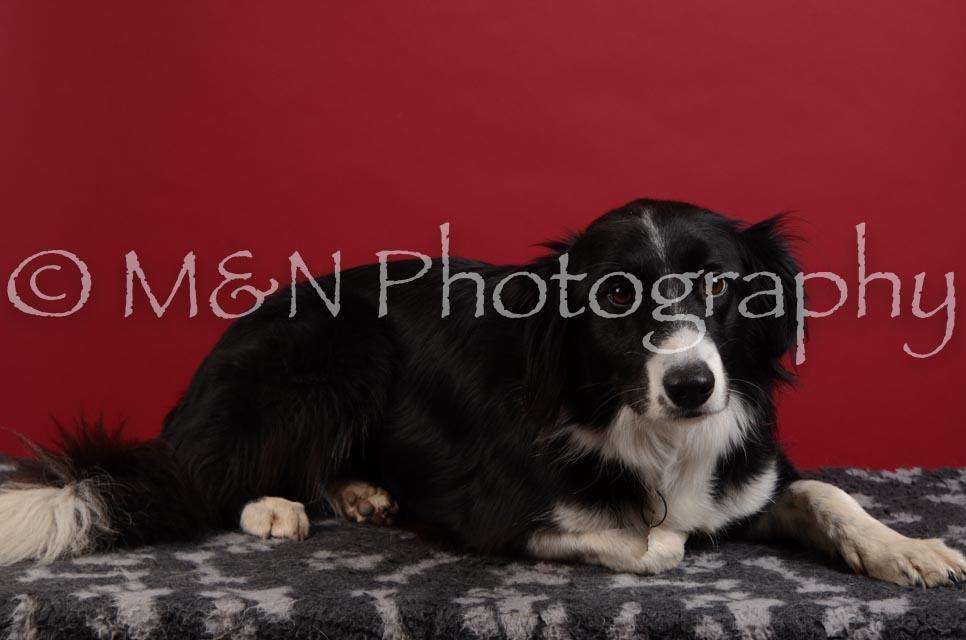 M&N Photography -DSC_3458