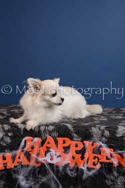 M&N Photography -DSC_5059