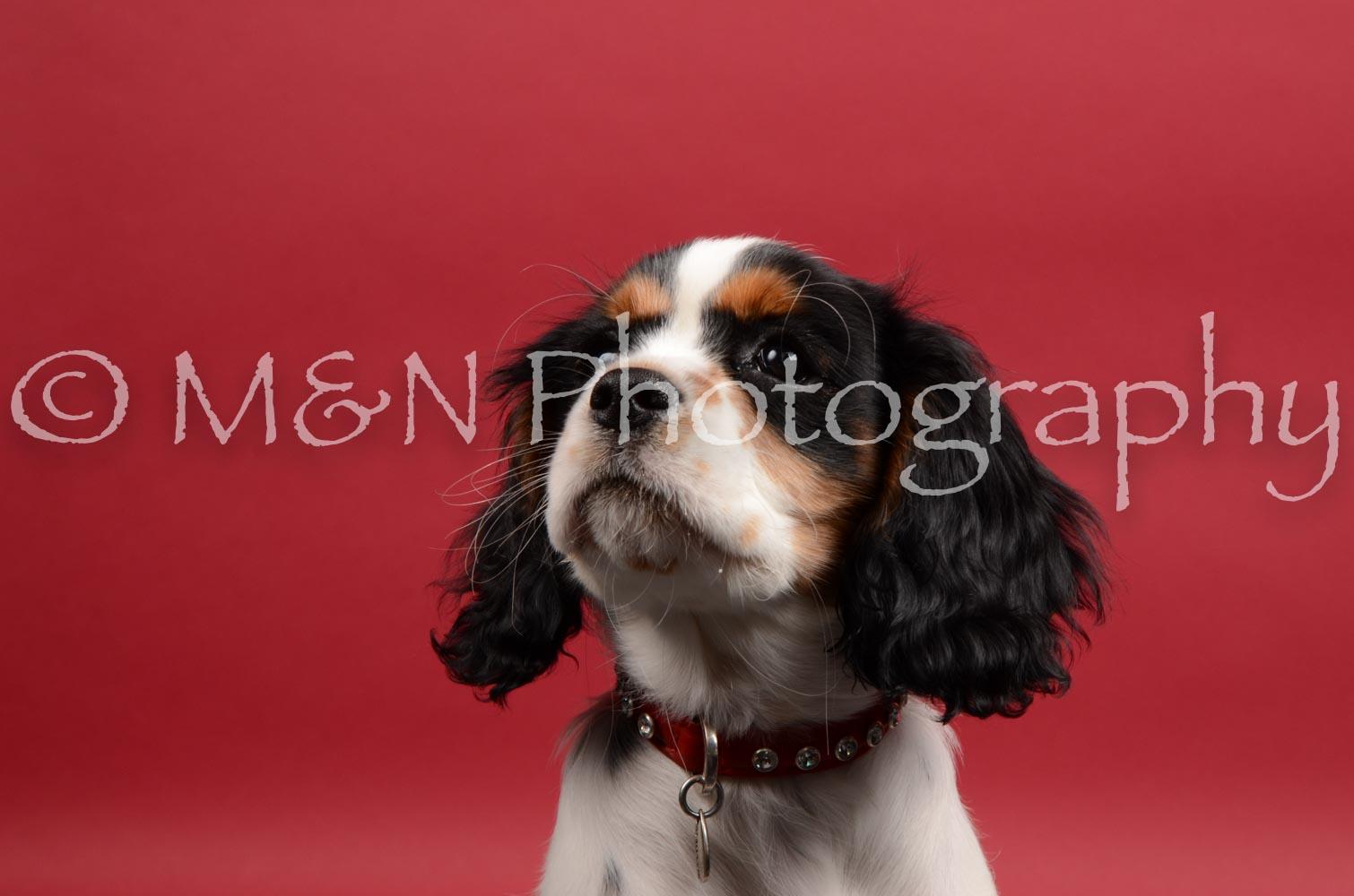 M&N Photography -DSC_8459
