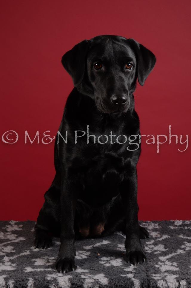 M&N Photography -DSC_3154