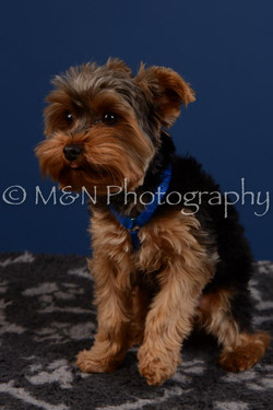 M&N Photography -DSC_5223