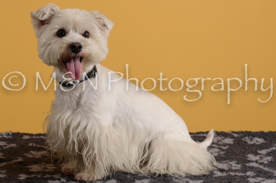 M&N Photography -DSC_4816