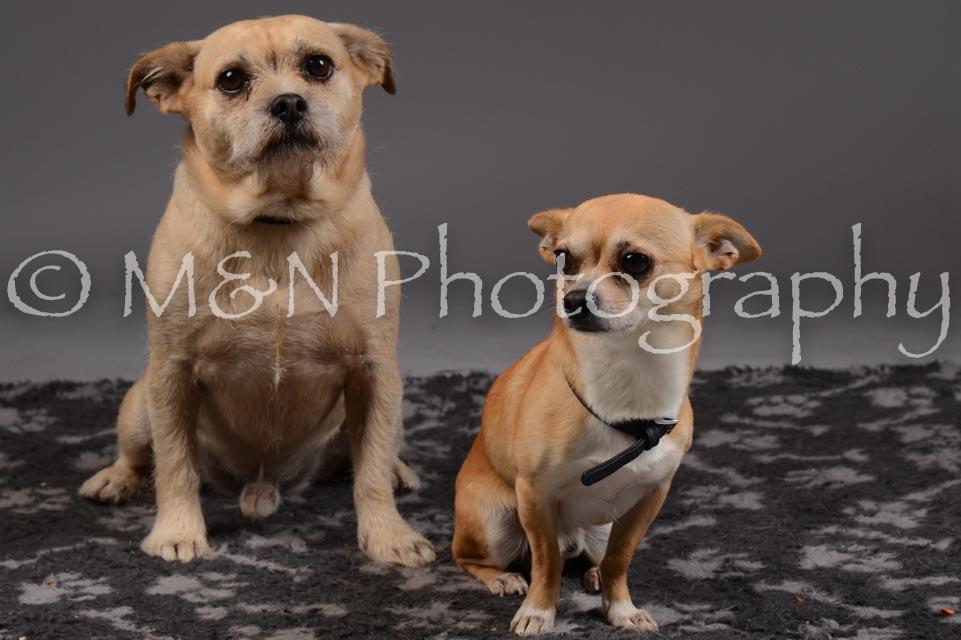 M&N Photography -DSC_2177