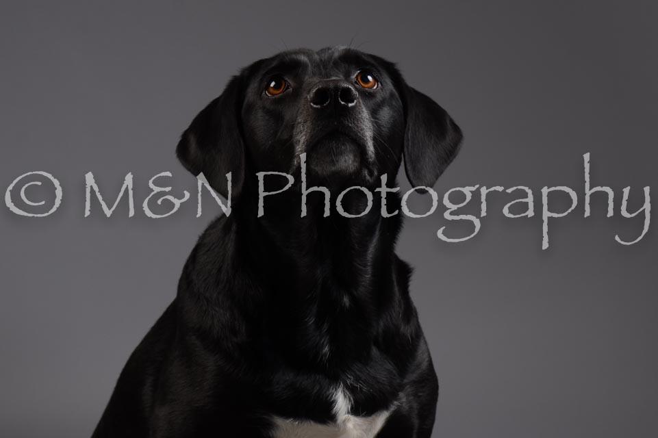 M&N Photography -DSC_2023