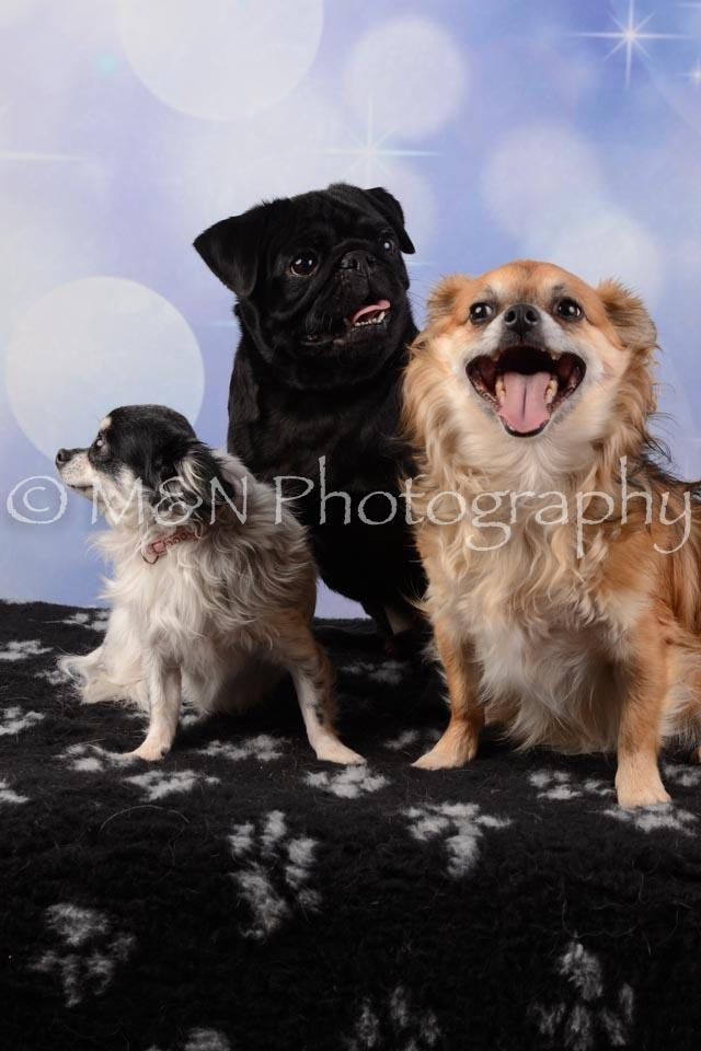 M&N Photography -DSC_6631