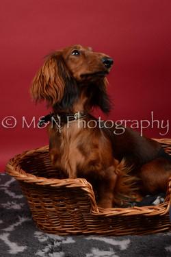 M&N Photography -DSC_8531