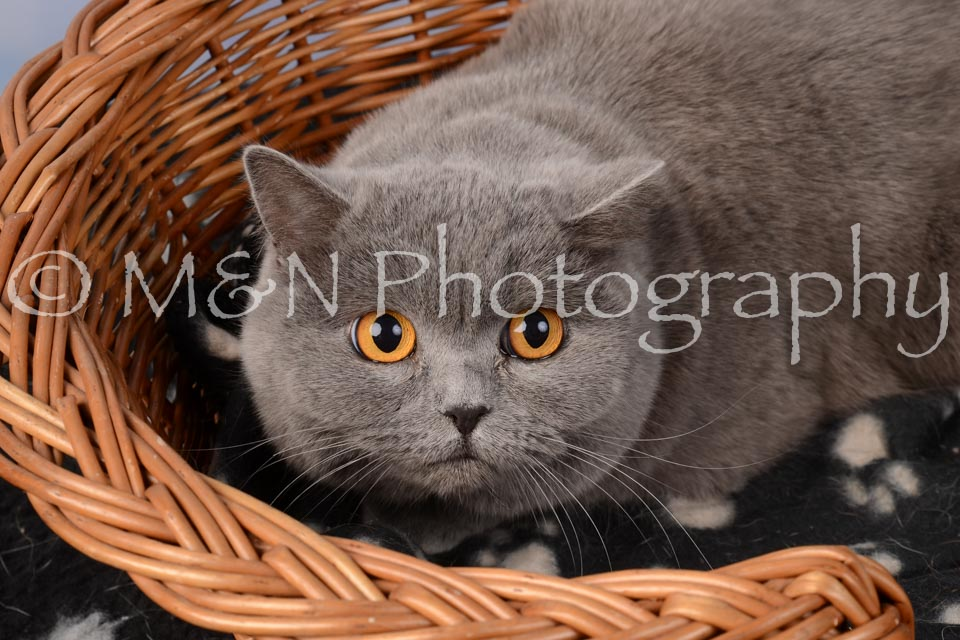 M&N Photography -DSC_6849