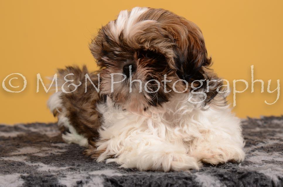 M&N Photography -DSC_4557
