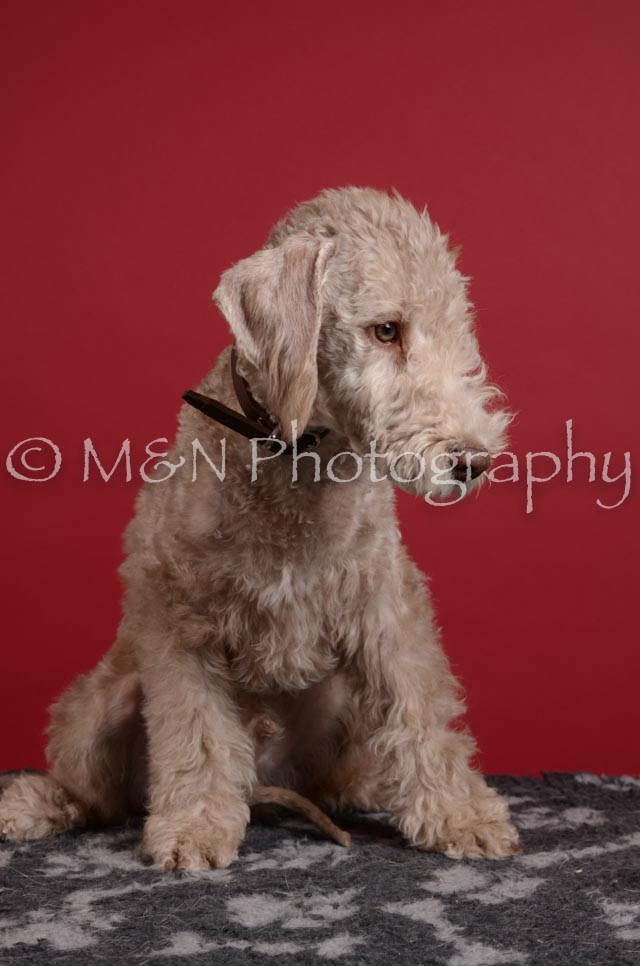 M&N Photography -DSC_3776