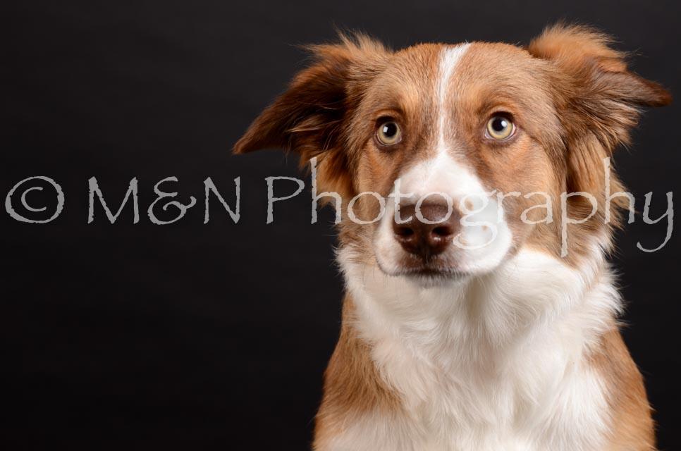 M&N Photography -DSC_5842