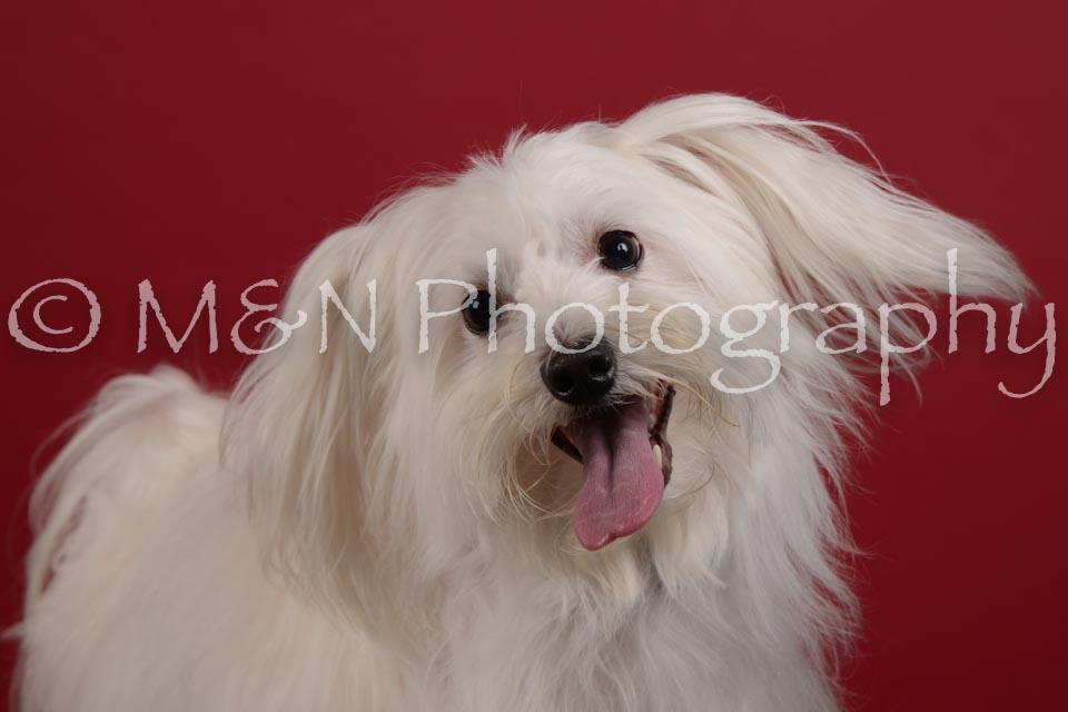 M&N Photography -DSC_3062