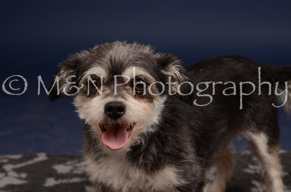 M&N Photography -DSC_0853