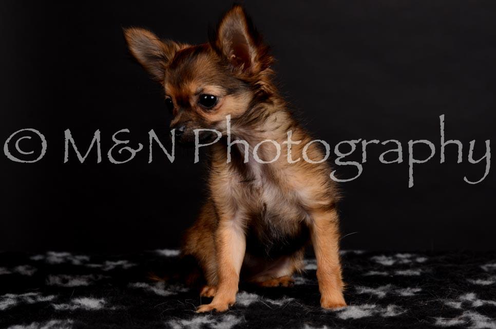 M&N Photography -DSC_5739