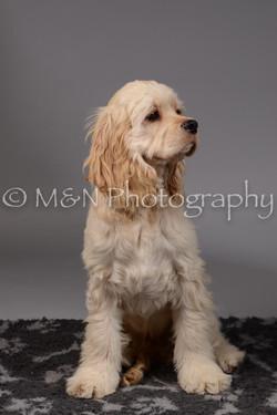 M&N Photography -DSC_1848