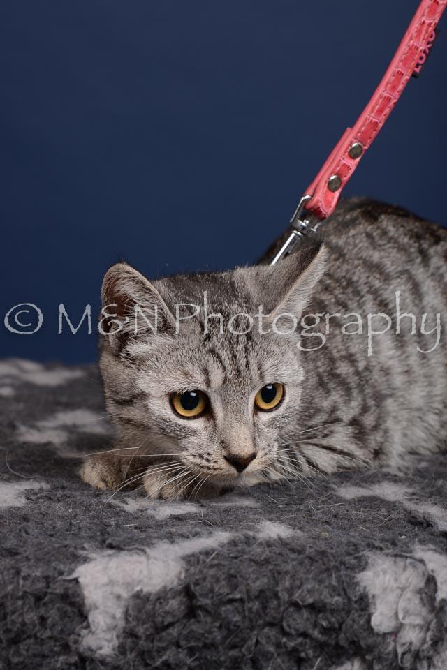 M&N Photography -DSC_4267-2