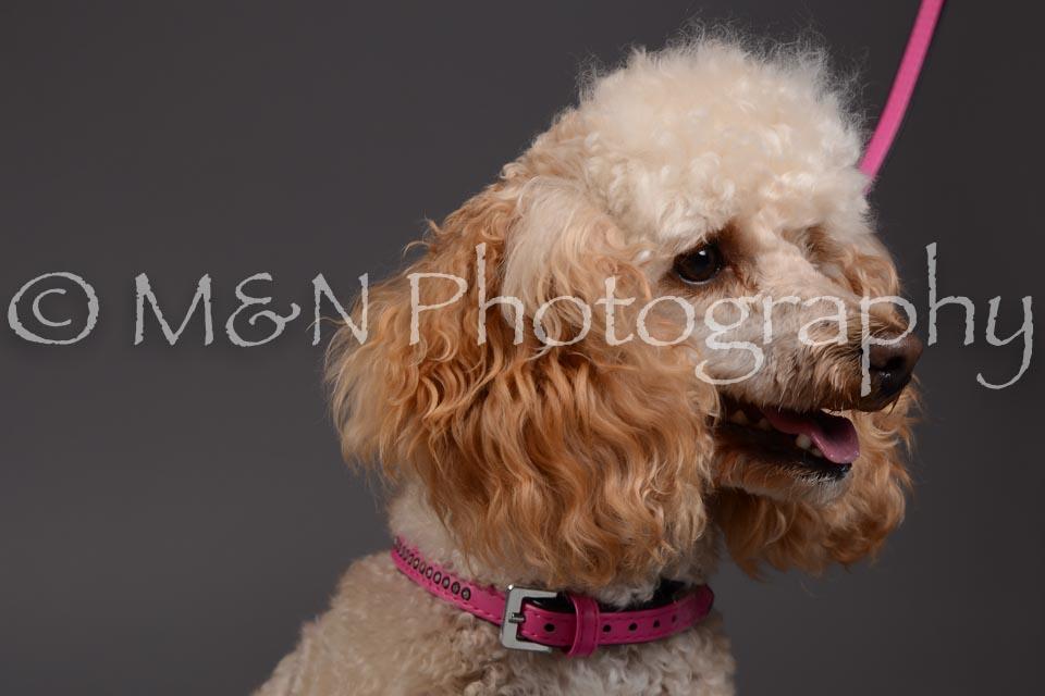 M&N Photography -DSC_2317