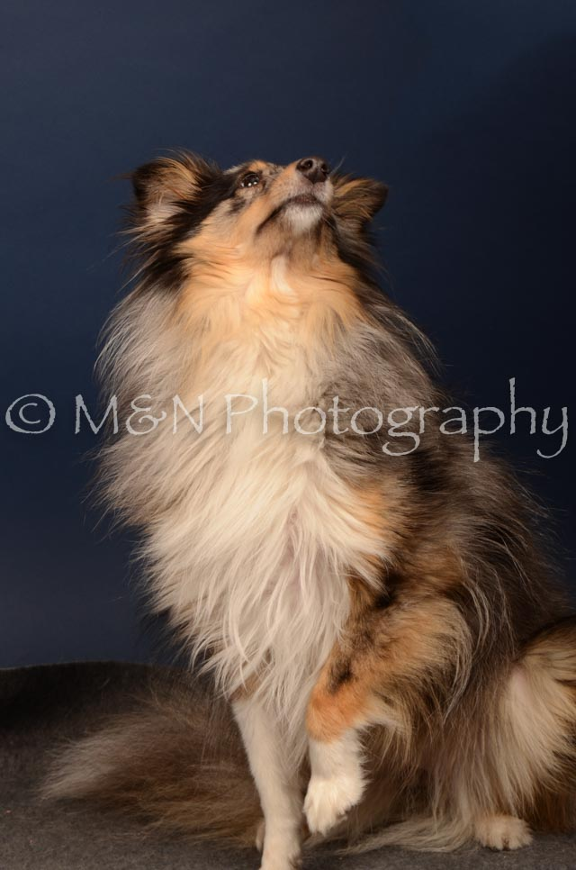 M&N Photography -DSC_4445