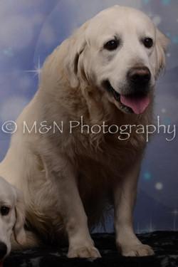 M&N Photography -DSC_7101