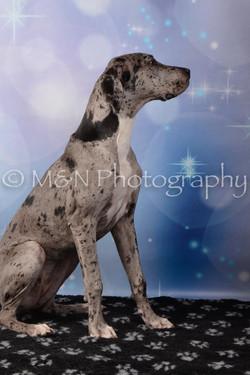 M&N Photography -DSC_6827