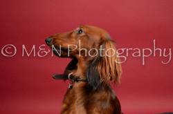 M&N Photography -DSC_8522