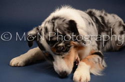 M&N Photography -DSC_4008