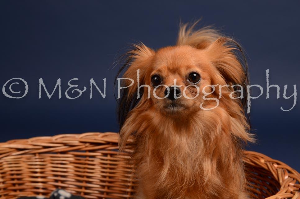 M&N Photography -DSC_0266