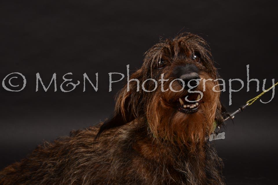 M&N Photography -DSC_9992