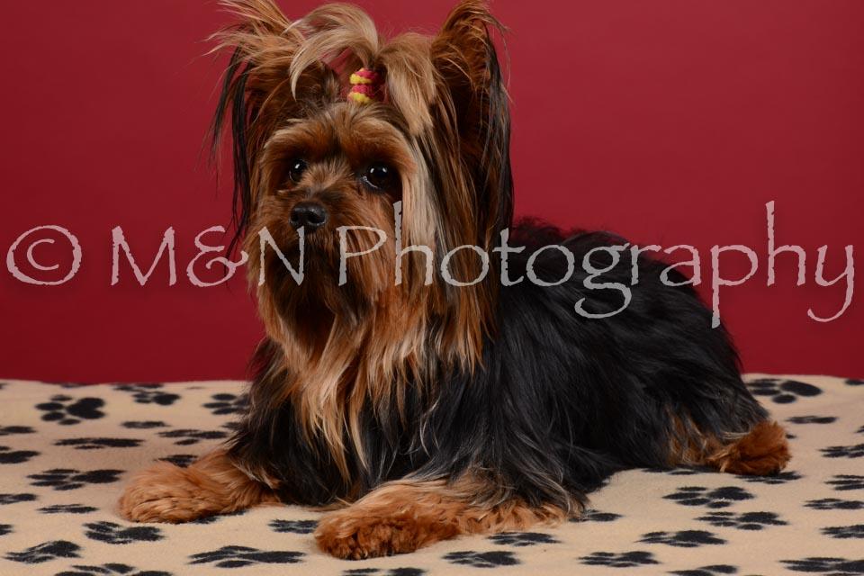 M&N Photography -DSC_3557