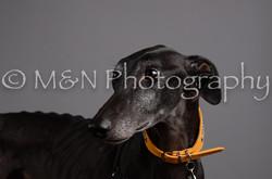 M&N Photography -DSC_2936