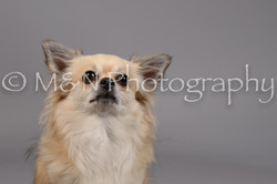 M&N Photography -DSC_1808