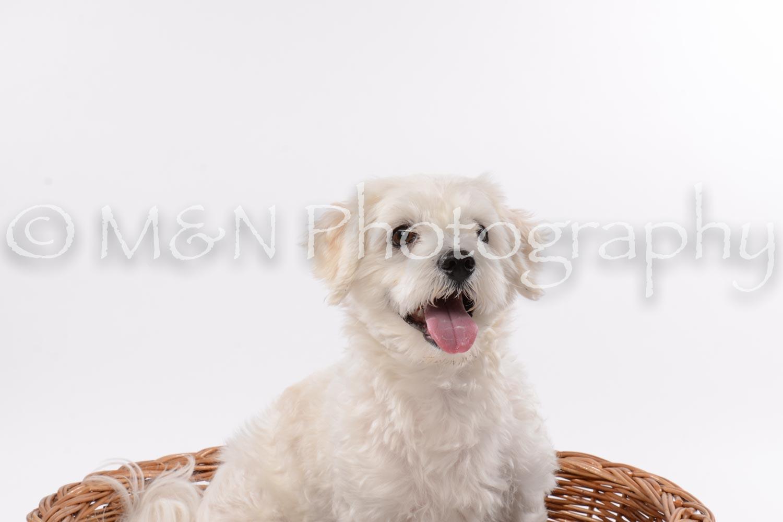 M&N Photography -DSC_8990
