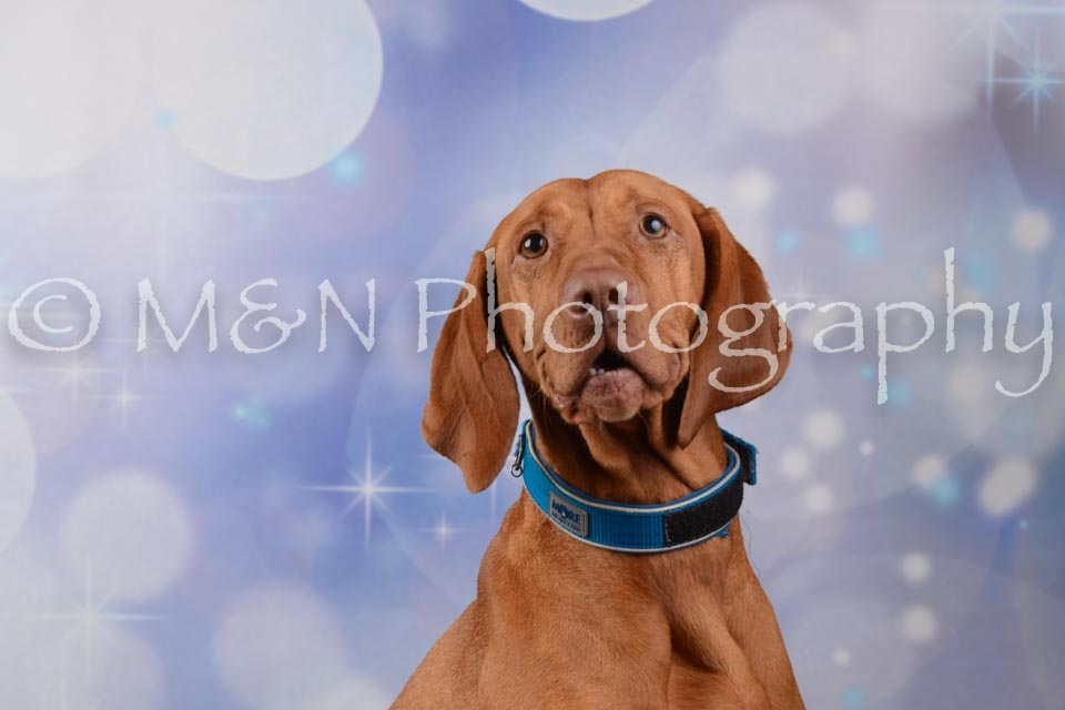 M&N Photography -DSC_7030