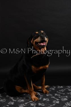 M&N Photography -DSC_2374