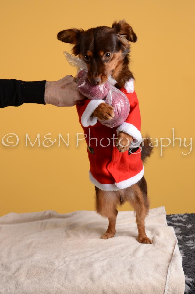 M&N Photography -DSC_4862