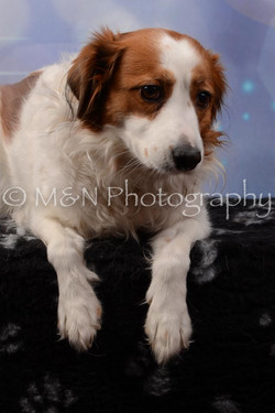 M&N Photography -DSC_6890