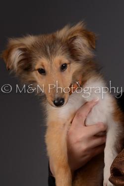 M&N Photography -DSC_2293