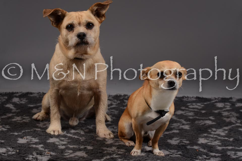 M&N Photography -DSC_2175