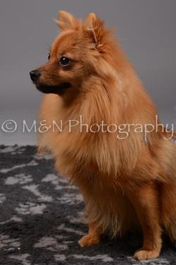 M&N Photography -DSC_2441