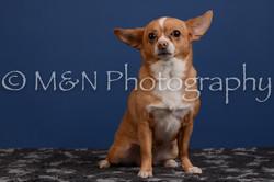 M&N Photography -DSC_5310