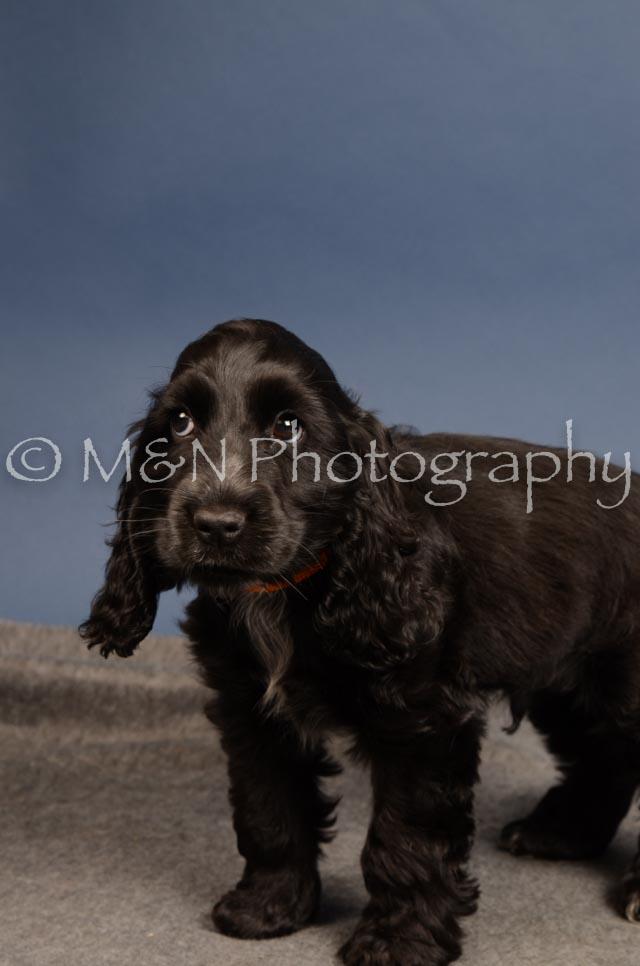 M&N Photography -DSC_4267