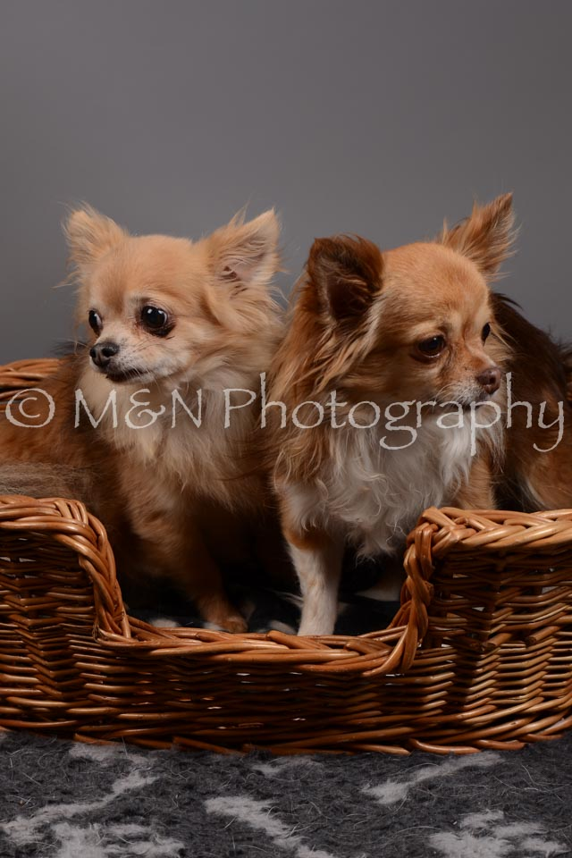 M&N Photography -DSC_1820
