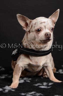 M&N Photography -DSC_5473