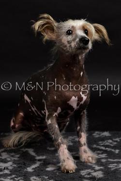 M&N Photography -DSC_2488