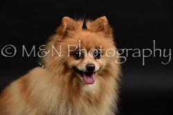 M&N Photography -DSC_2594
