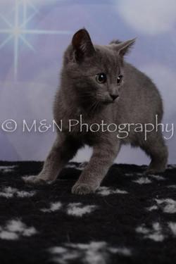 M&N Photography -DSC_6537